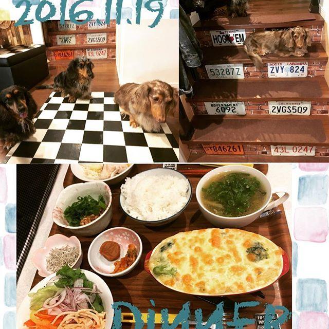 2016/11/20 01:55:28 crybaby44 本日の1日1食#グラタン ♡ 旦那様のには玉ねぎ入れてあげたら大喜び♪yuiのには入らんようによけるの大変やった(*≧∀≦*)笑  階段でくつろぐパパ 猫ちゃんみたい٩(๑❛ᴗ❛๑)۶ #くらし#日々#家#ごはん#ばんごはん#おうちごはん#料理#健康#ヘルシー#ファスティング#犬#愛犬#わんこ#ダックスフンド #instapic#instaphoto#instadialy#instafood #instadog#dog#dachshund#meal#dinner#japan#japanesefood  #健康