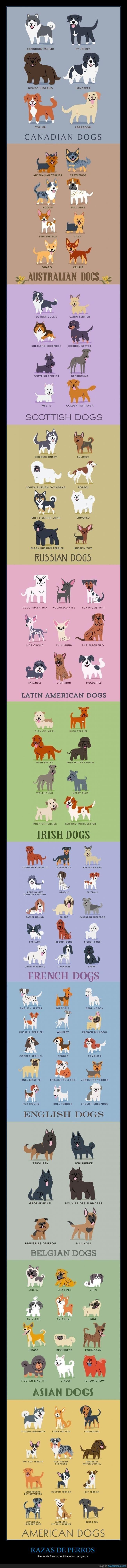 RAZAS DE PERROS - Razas de Perros por Ubicación geografica