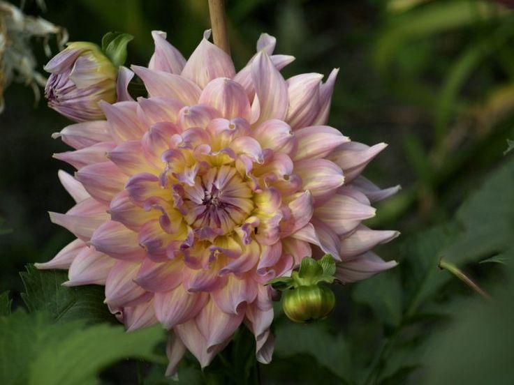 Zielono Zakręceni: Przysypani Tęczą Kwiatów czyli ogród Kryzysowej i Qry (11/11)