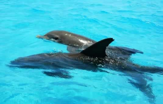 Key West Dolphin Adventure | Swim & Snorkel | Things to Do in Key West Florida