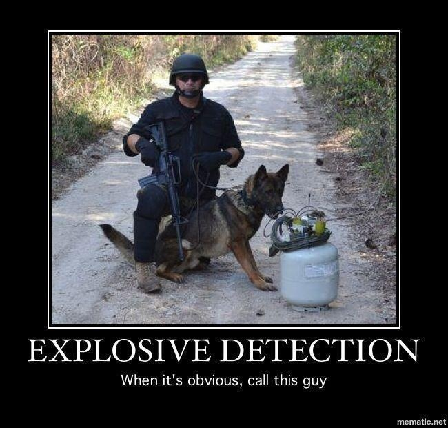 Funny Eod Dog Dog Stuff Pinterest Funny And Dogs