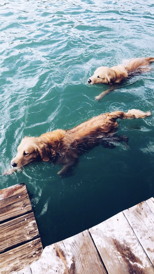 Dogs Inspo Vsco Puppies Goodmorning Summer Swimming Cuddles
