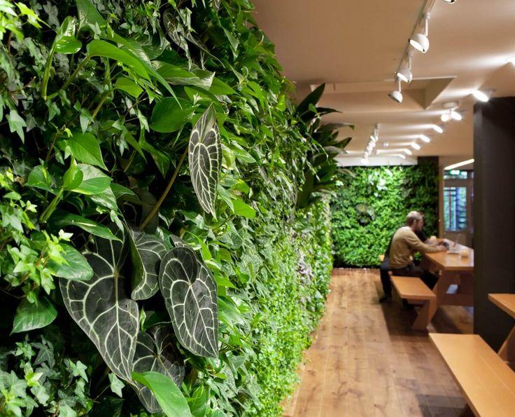 Vertical garden / plantwall restaurant, groene wand, verticale tuin, Pflanzenwand, Amsterdam