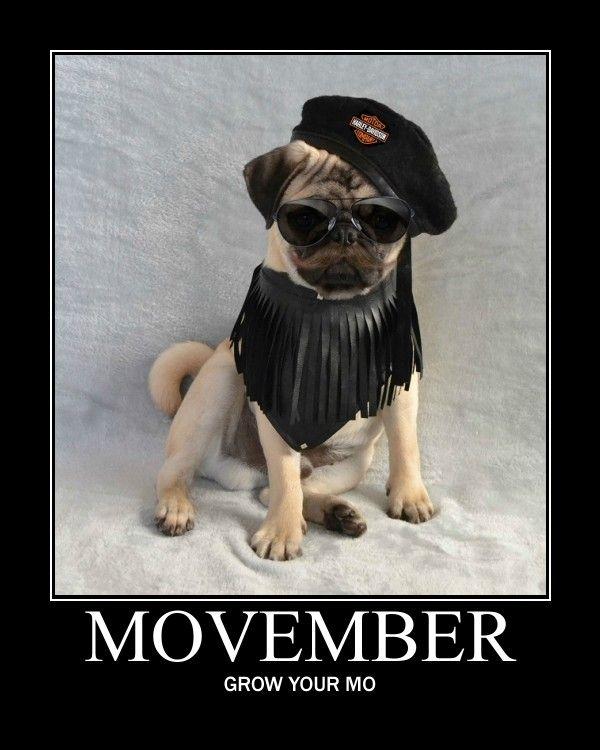 Funny Pug Dog meme LOL Our Pug Boo For Movember #pug #dog ...
