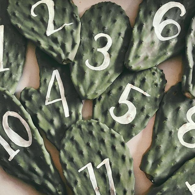 CACTUS PADDLES FOR TABLE NUMBERS. XX