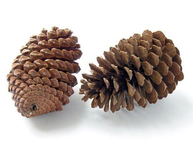 Existem dois principais tipos de plantas com sementes. Gimnospermas são os tipos de plantas que produzem sementes nuas, ou sementes que não estão cobertas ou crescem dentro de vagens ou frutas. O segundo tipo de plantas com sementes são as angiospermas. Essas são o tipo de plantas que produzem flores. As flores eventualmente se transformam em frutas que contêm sementes. Os tipos de plantas de sementes podem ser subdivididos.  Outras pessoas estão lendo Classificação de orquídeas Quais são os…