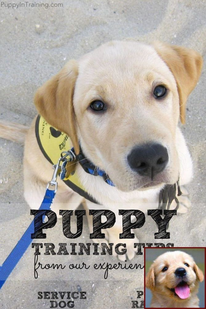 1 Have Dog Behavior Problems Learn About Cost Of Potty Training A