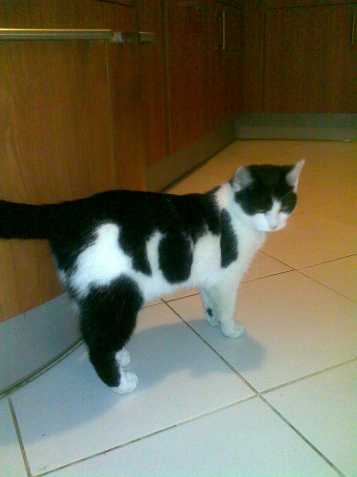 Hluboce zamyšlená kočičí slečna