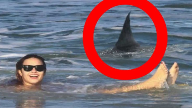 When SHARKS ATTACK! Multiple REAL SHARK ATTACKS caught on camera tape! (The ultimate shark attacks compilation video!) ***We believe this video contains the ...