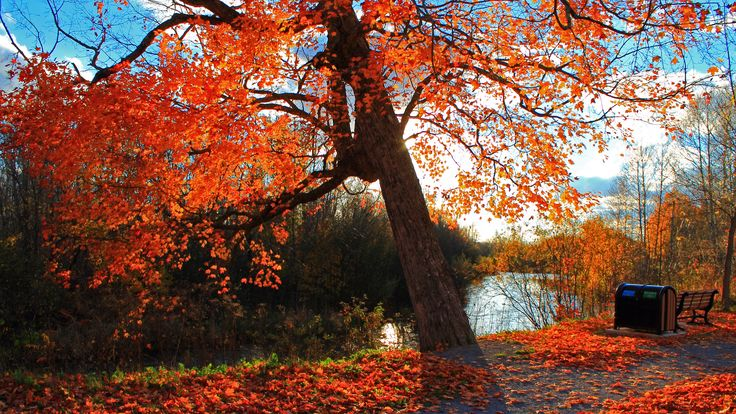 Landscape 4K Ultra HD Wallpaper  | Wallpaper 3840x2160 autumn, park, river, shop, landscape 4K Ultra HD ...
