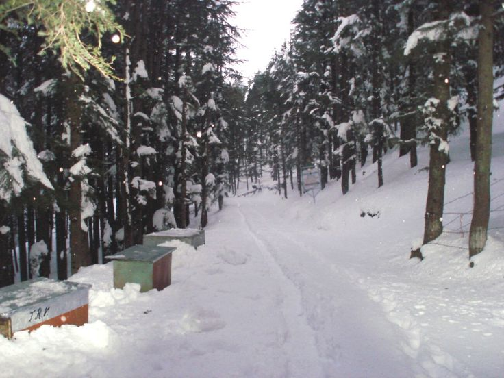 We at Dudaney's Snow King Retreat are committed to provide you highly clean and hygienic rooms. http://www.snowkingretreat.com/terms-conditions.php