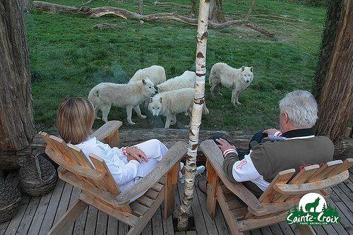 La cabane du Trappeur avec les loups blancs - Parc de Sainte-Croix Crédit photo : Laurent Mami - Républicain Lorrain