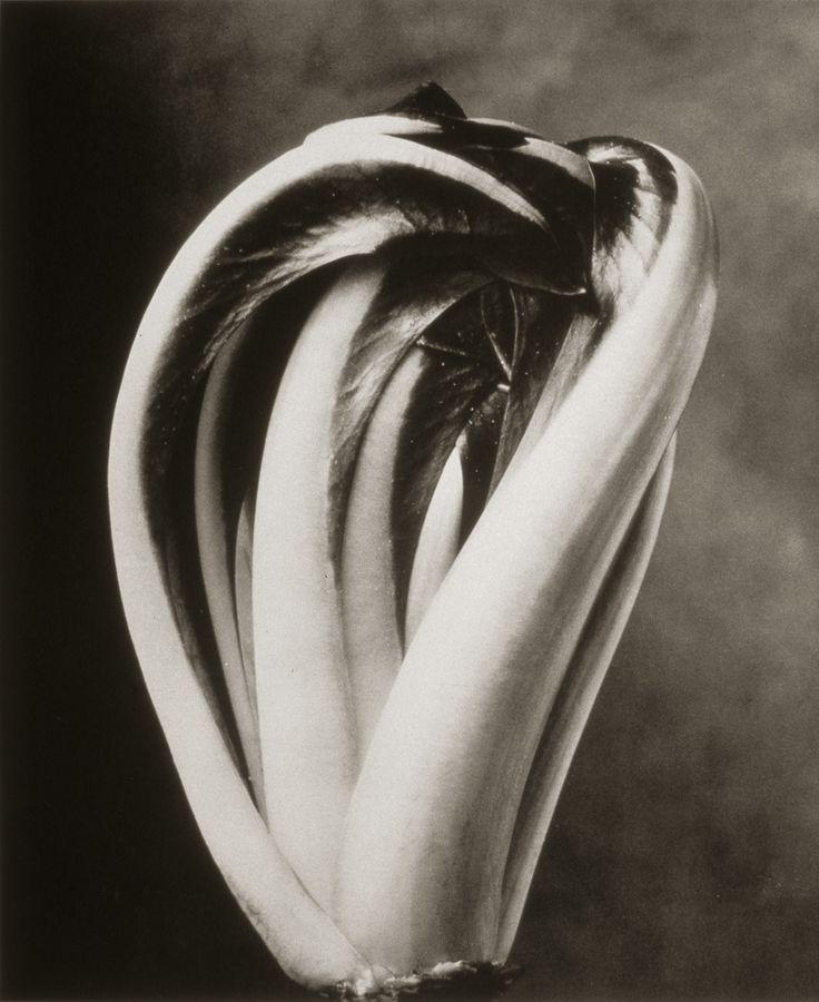 Radicchio Trevisano ©Cy DeCosse Fine Art Photography. The Beauty of Food Collection. Limited edition platinum-palladium print. CyDeCosse.com #photography #art #food