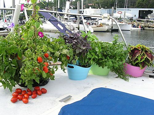 Don't have to leave gardening when sailing!!!!