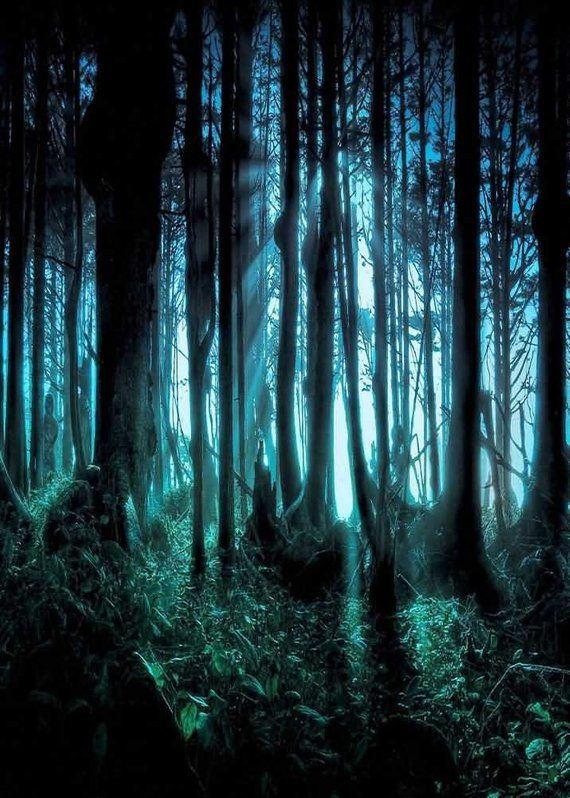Dreamy Woods Backdrop Computer Printed Photography Background Etsy Dark Wallpaper Forest Wallpaper Backdrops Backgrounds