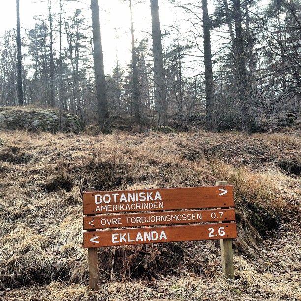 Fantastisk natur/ promenad på vägen till Botaniska Paviljongen i hjärtat av Göteborgs botaniska trädgård
