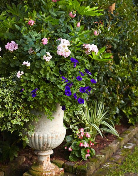 Urn with petunias, geraniums, violas, and roses. A series of garden rooms at a lovely home in Charleston's historic district conjures the charm of the Old South. Traditional Home.  Photography by Brie Williams