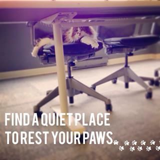 They'll save a seat for you at meetings. | 19 Reasons Why Every Office Should Have A Cat