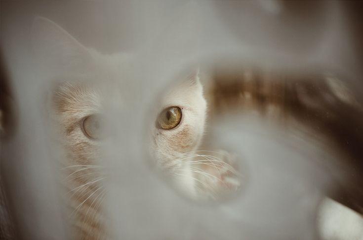 Daria  | costanzam | VSCO  #cat #redcat #cats