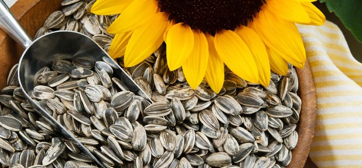 Did you know that munching on some sunflower seeds, also known as 'surajmukhi ke beej' in Hindi can offer incredible health benefits?