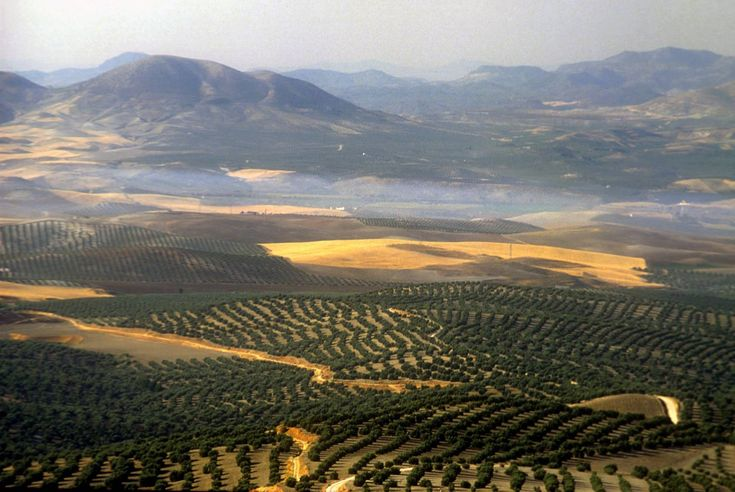 Jaen, Spain- miles and miles of olive tree farms