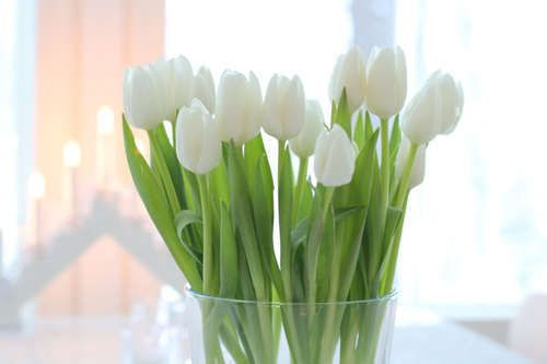 : White Flowers, Favorite Flowers, Color, Art, White Tulips, Bloom, Spring, Design, Floral