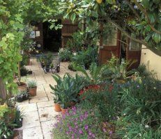 Courtyard Garden design / chris barnes gardens / green home