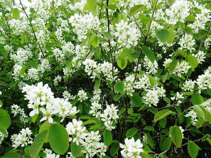 2016-05-21. In bloom