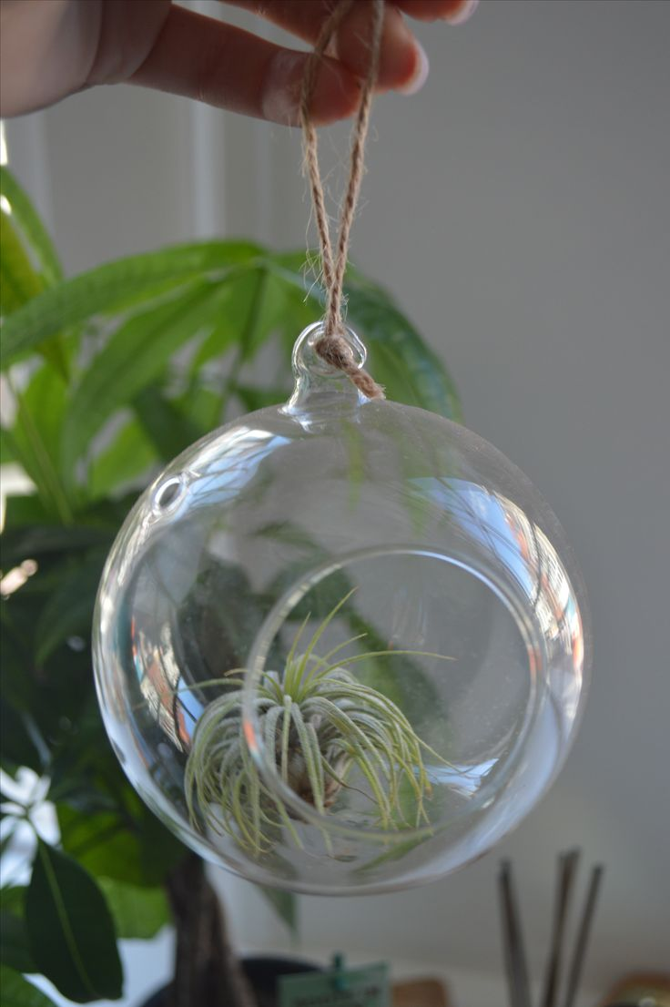 Airplant - available at my website