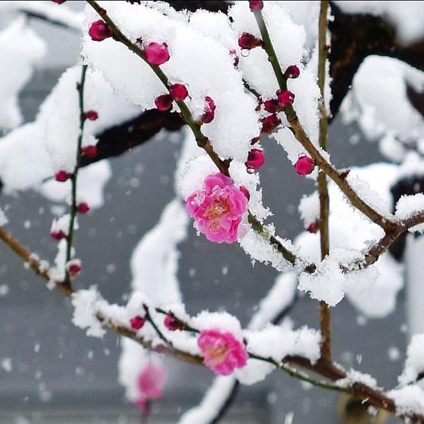 1000 images about winter wonderland on pinterest snowflakes felt