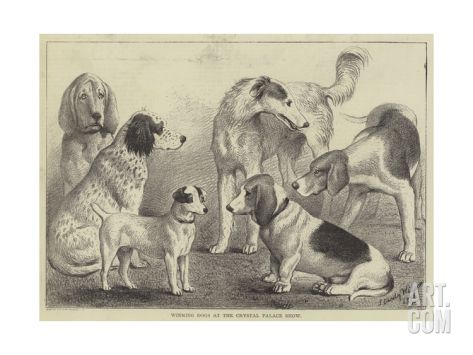 Winning Dogs at the Crystal Palace Show Giclee Print