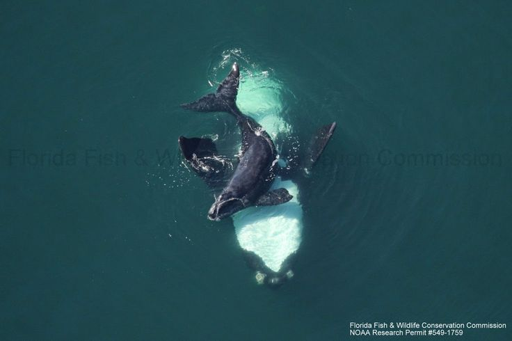 the decreasing whale populations around the world A sad history of whaling species remained at a worrying level and were decreasing all) humpback whale populations around the world are growing and.