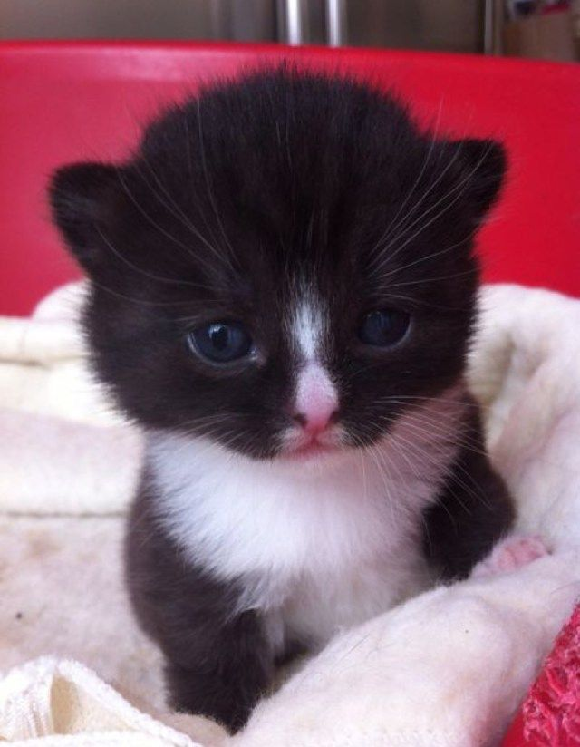 This sure is one cute kitten