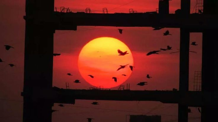 #sunset #lategram #silhouette #art #nature #artinnature #_soi #indiapictures #desi_diaries #travelblogger #concretejungle #sun #birds #nofilter #birdart #ngtdailyshot #colorandlight by ghumakkad_baba