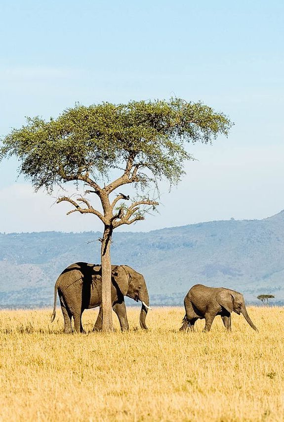 With a land mass of 945, 203 square kilometres, Tanzania is the largest country in Eastern Africa. There is so much to see especially when it comes to the extensive wildlife. If you haven't seen an elephant Tanzania is the place to see them. Timbuktu Travel.