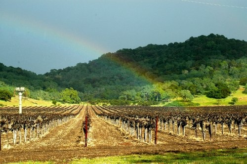 Rainbow in Napa Valley