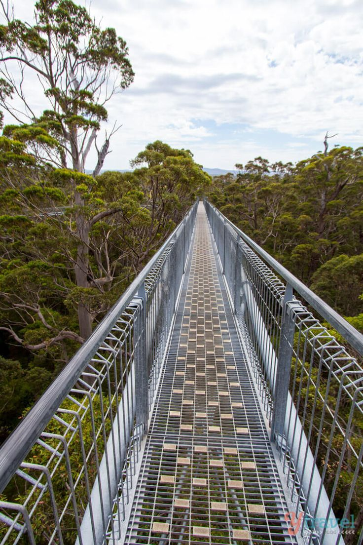 Tree Top Walk at the Valley of the Giants, Western Australia   RePinned by : www.powercouplelife.com