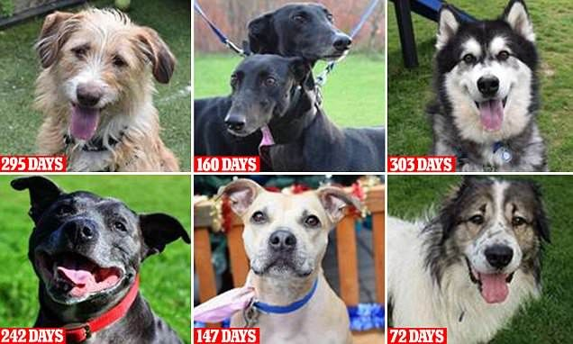 Battersea's appeal to rehome longest standing residents #DailyMail