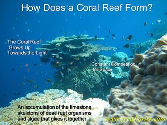 How Does a Coral Reef Form? | Great Barrier Reef | Cairns, Australia