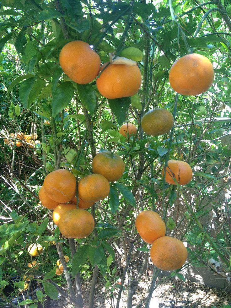 Tropical Fruits In Pine Island Florida