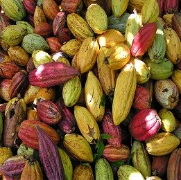 #CocoaAbsolute beneficial for the people who are affected the problem of impotency and other sex-related problems.
