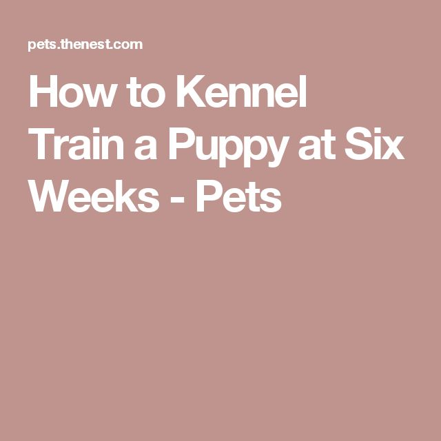 How to Kennel Train a Puppy at Six Weeks - Pets