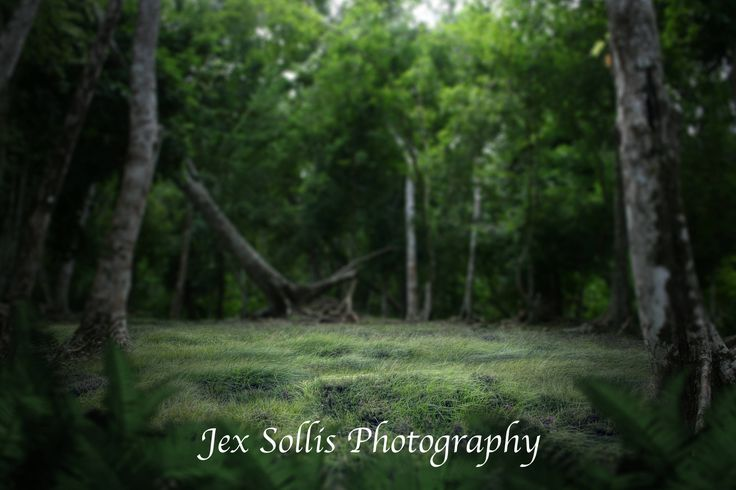 Jungle Digital Backdrop https://www.etsy.com/au/shop/JexSollisPhotography  #art #photography #green #black #digitalbackdrop #digitalbackground #overlay #junglebackdrop #composite