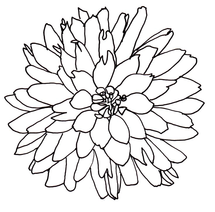 Simple Line Drawing Of Flower : Line drawing flowers dahlia drawings pinterest