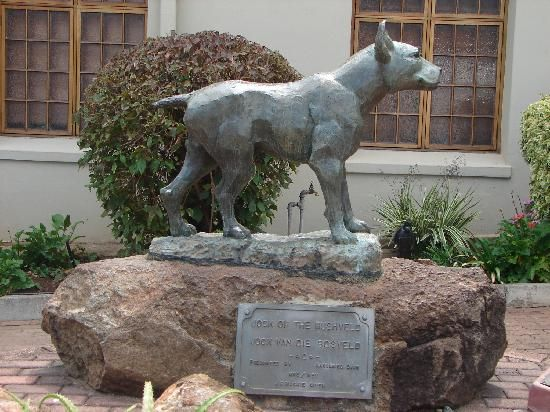 Statue of Jock of the Bushveldt ....South Africa.... in front of the City Hall in Barberton, Mpumalanga