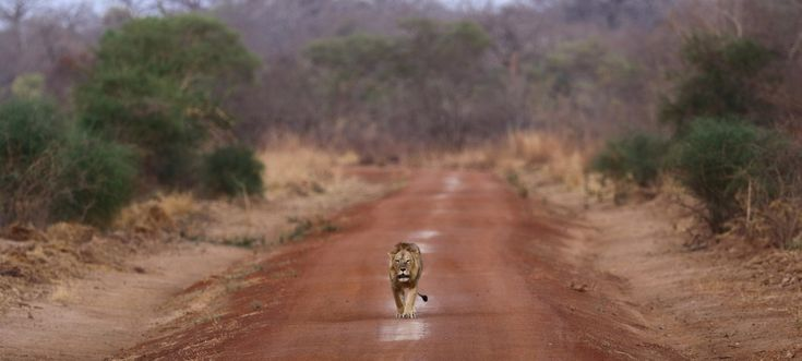 Today, the National Geographic Society, African Parks, the Wyss Foundation and the Republic of Benin announced a groundbreaking partnership to help secure and rehabilitate one of the last remaining wild landscapes in all of West Africa, Benin's Pendjari National Park. Together, the four partners are initially committing more than US$23M to safeg...