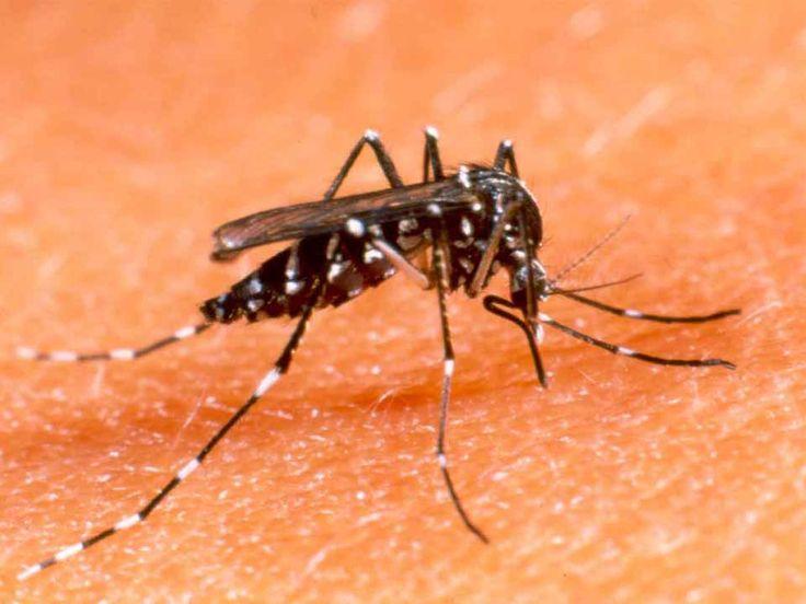 Colégio Peretz declara guerra contra a dengue. Alunos realizam mutirão com a comunidade para combater a doença.