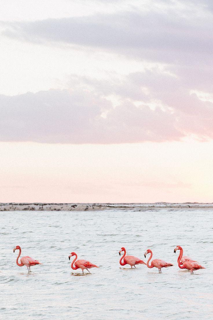 The Pink Lagoon at Las Coloradas, Yucatán - THETRAVELBLOG.at
