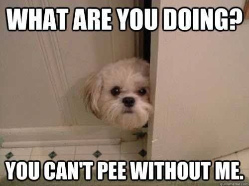 Hee hee . . . As a mom of both children and furry babies, going to the bathroom by myself is rare.