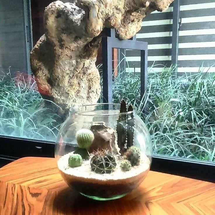 Happy to see them healthy  #terrariumjakarta #terrarium #terarium #cactus #cacti #kaktus #sukulen #succulent #jualsukulen #jualtanamanhias #jualtanaman #tanamanhias #indoorplant #indoorgarden #garden #taman #jardim #jardin #gardening #interior #innercourt #art #craft #echeveria by livealeaf